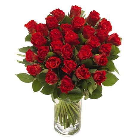 Rote Pracht - Rosen zum Valentinstag