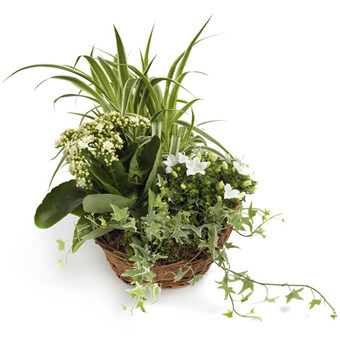 Pflanzenmix