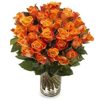 Rosen in Orange