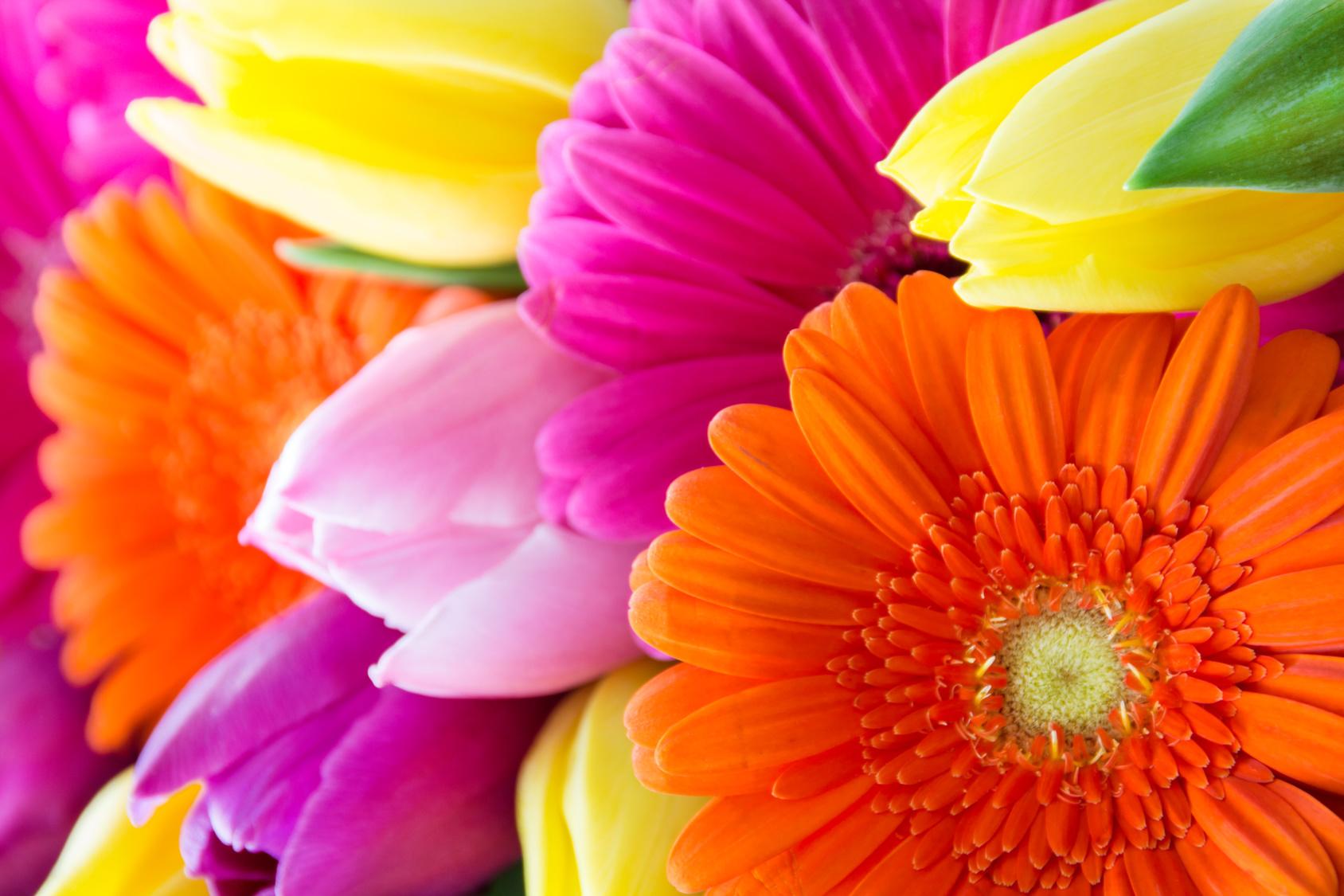 Tipps-zur-Blumenpflege